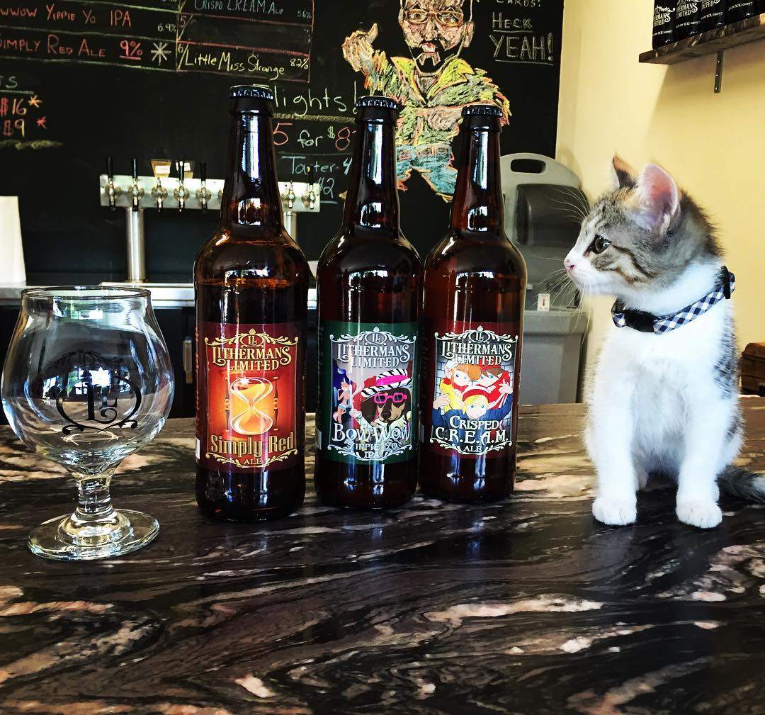 The only kind of Brett we're letting into the brewery as of right now 😜 loved our visit with Little Brett today at the brewery  #littlebrett #brett #brettanomyces #catsontap #beercat #lithermans #howmuchcanyoucarry @catsontap