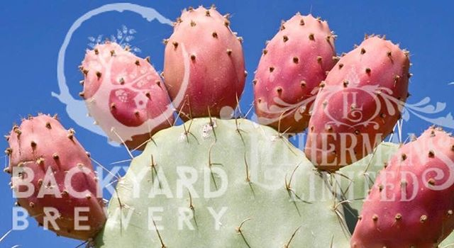 """We release """"PEAR NECESSITIES"""" Saison on DRAFT ONLY, brewed with Paul from Backyard Brewery with a generous helping of prickly cactus pears and a subtle dry-hopping of Hull Melon. Available at Lithermans, Backyard, and a few equally cool spots."""